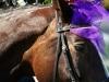 Pferd der Braut