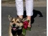 Hund mit Fliege
