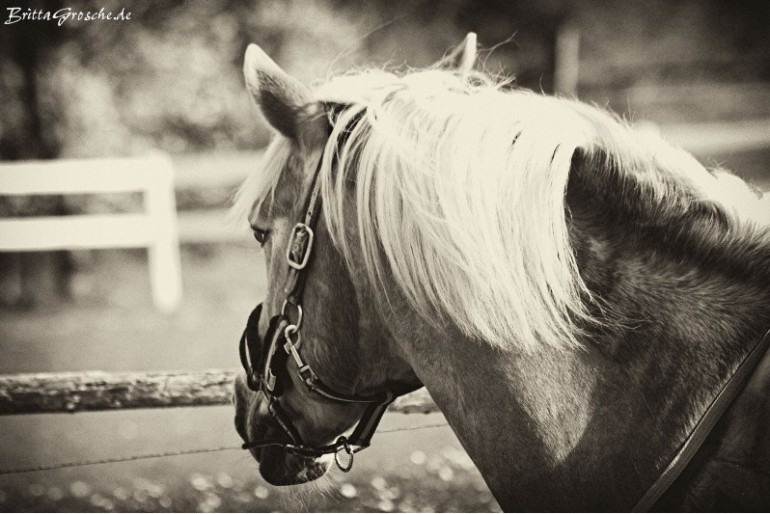 Pferdeporträts