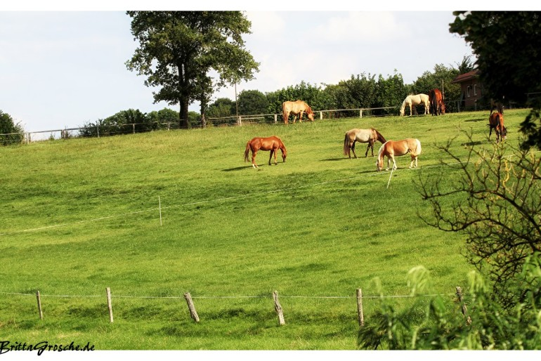 Impressionen von der Ramm Ranch in Grabau