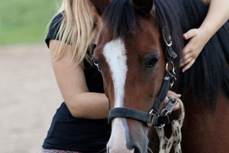 Aleyah und die Pferde